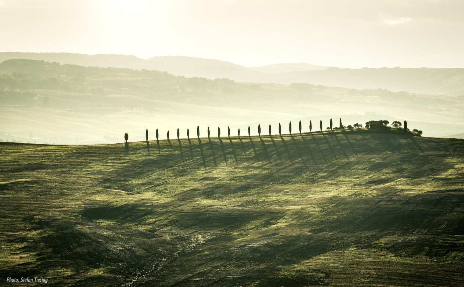Cypress Road (Tuscany)