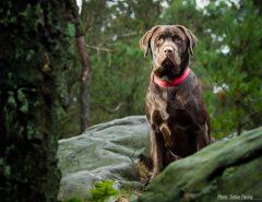 Forest watchdog (V2)