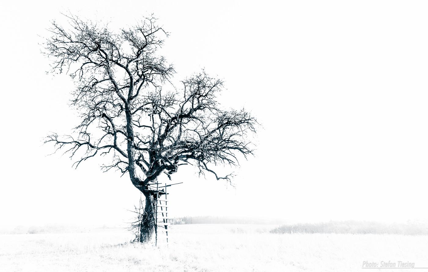 Hunters Tree