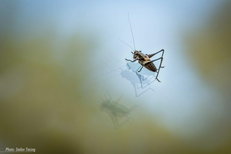 Jiminy on Ice