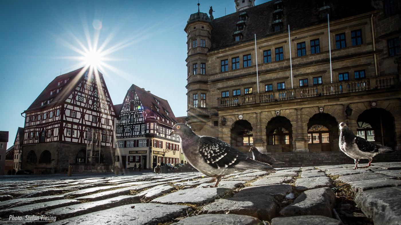 Pigeons invasion (Marketplace, Rothenburg ob der Tauber)