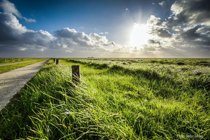Rich green frisian pastures (Northern Germany, way to Hamburger Hallig) -2-