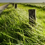 Rich-green-frisian-pastures-(Northern-Germany,-way-to-Hamburger-Hallig)--2--(MakingOf-2)