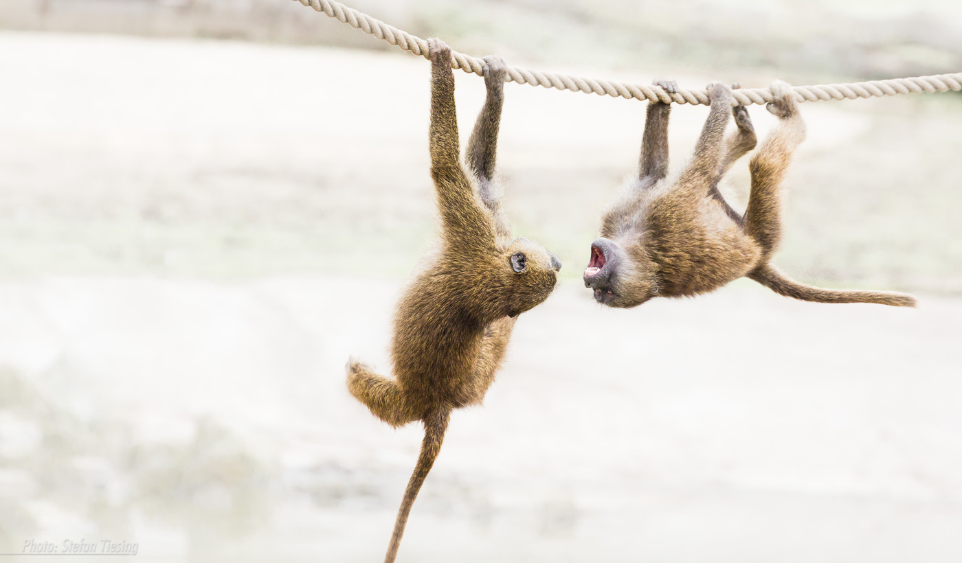 Rope Fight