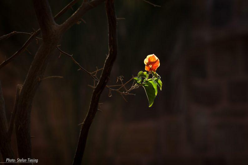 Summers last blossom