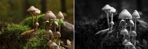 Moonlight & Mushrooms (MakingOf) 01