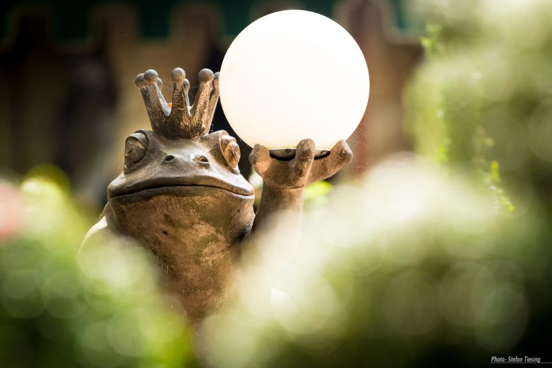Frog makes Light