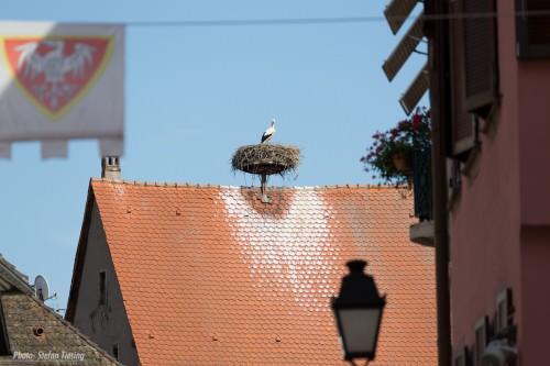 Stork's Nest (MakingOf)