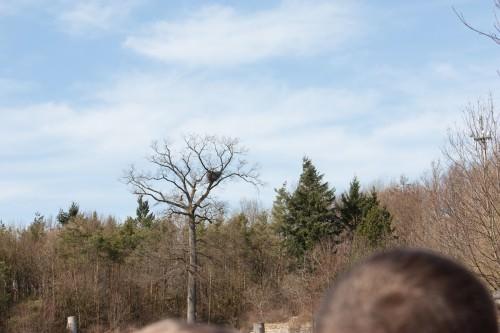 Where the storks nest