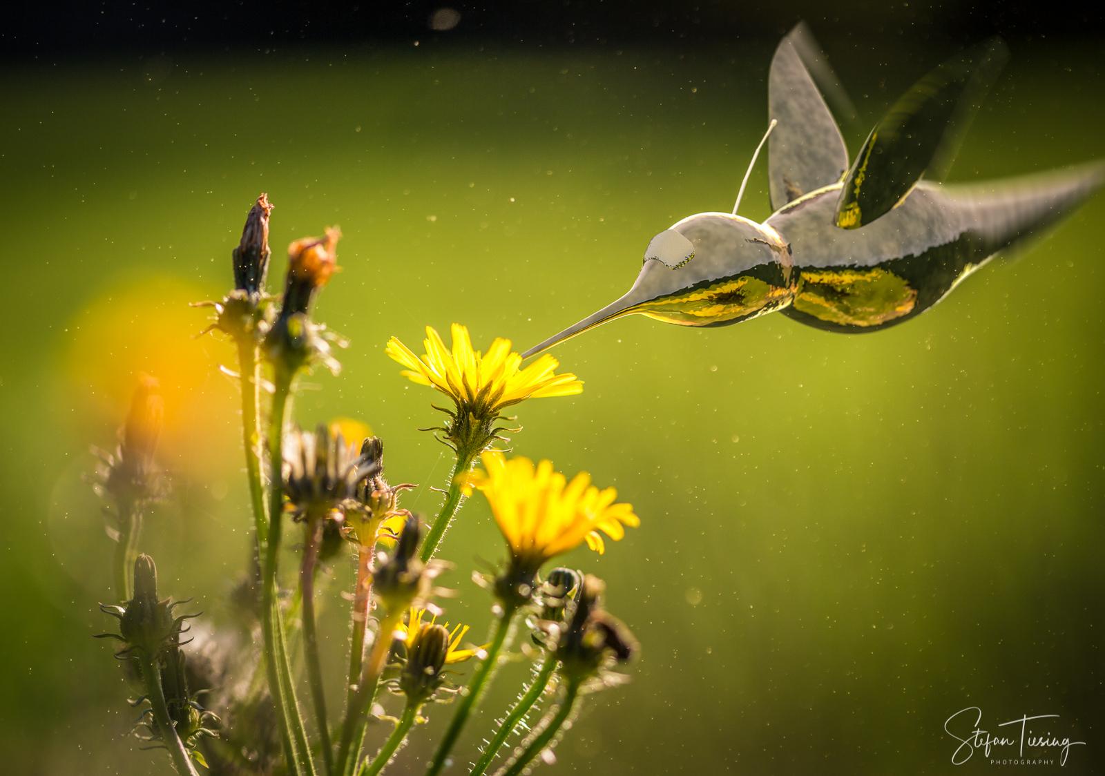 Iron Hummingbird (1)