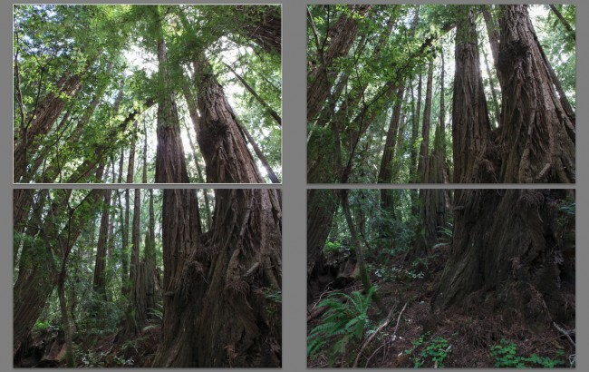 Twin-Giants-at-Muir-Woods-(V2)-MakingOf-1