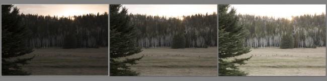 Kaibab Deer near Kaibab Plateau-North Rim Parkway (MakingOf) 03