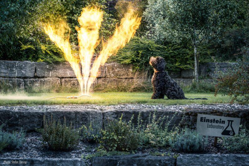 Burning Sprinkler