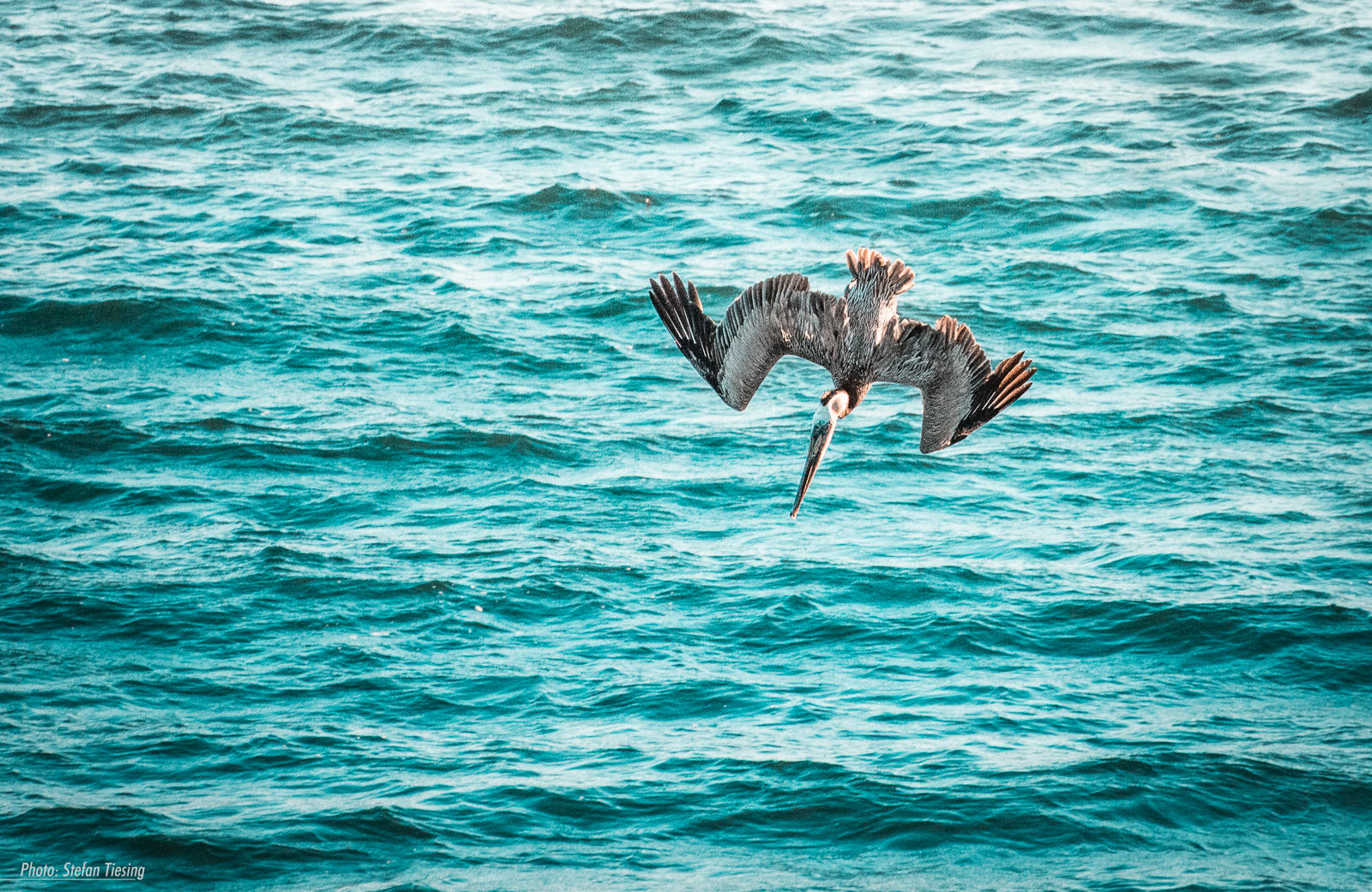 Pelican Attack