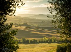 Tuscan Fields in the Morning