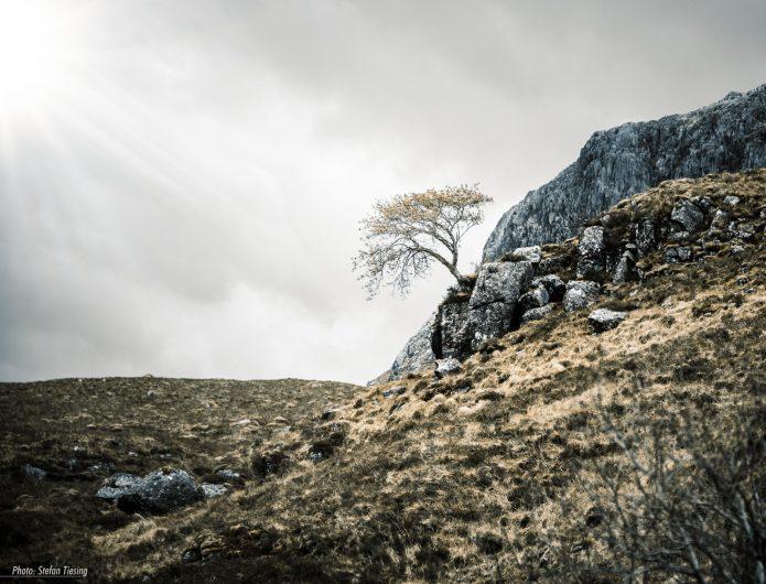 Scottish Highland Tree