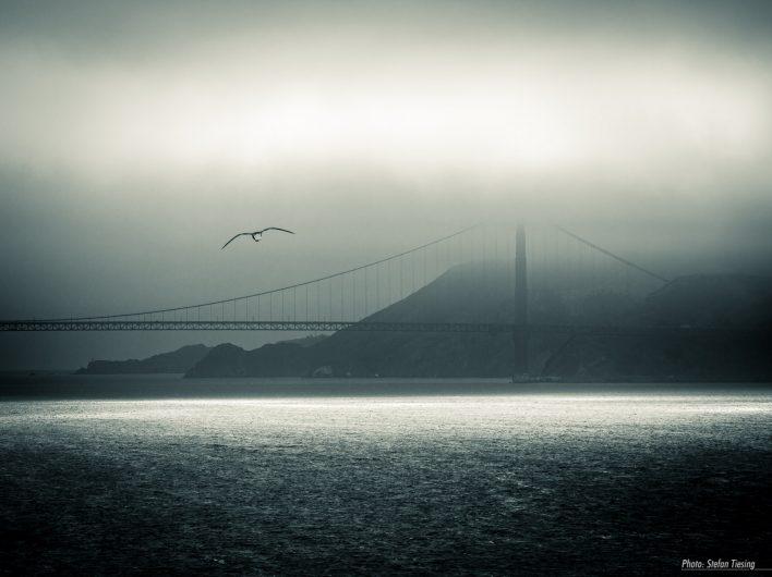 The Bridge and the Gull