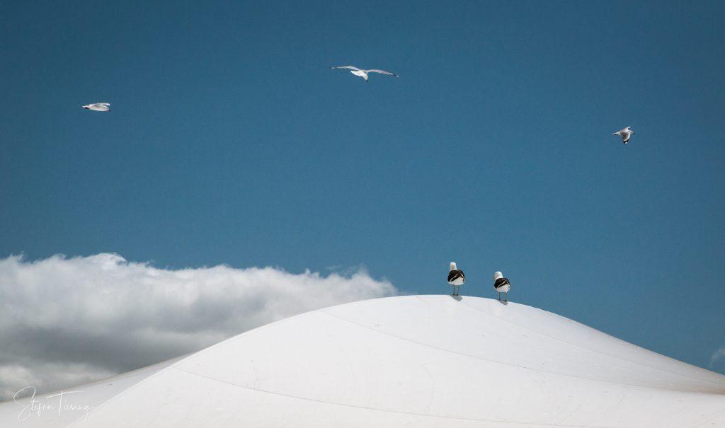 Vorsicht bei Möwen: Mit der Drohne in Neuseeland fliegen