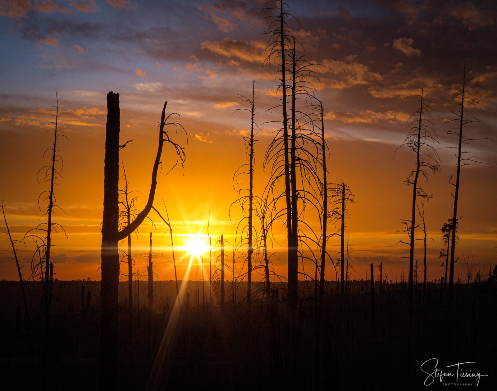 After the Burning (Kaibab National Forest)