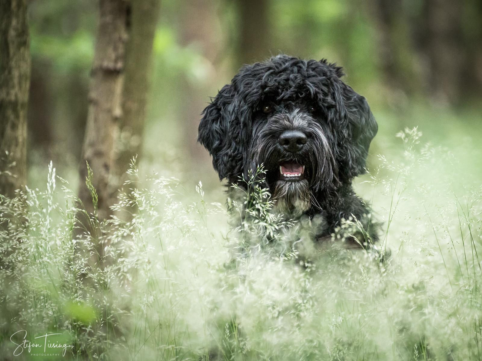 Dogs Allergy Test