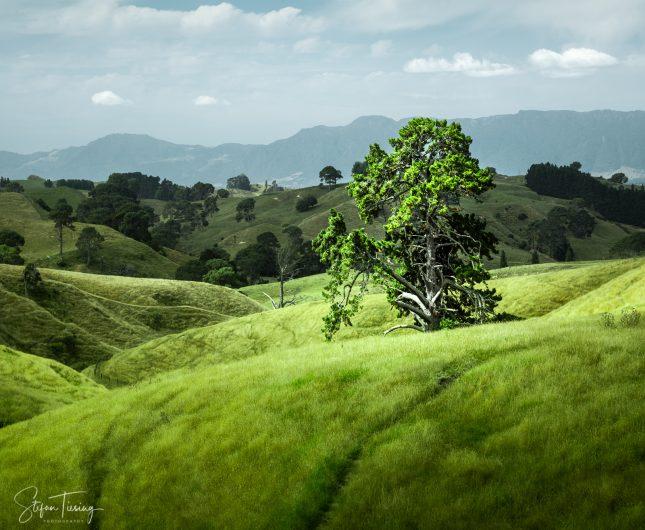 Shire Tree