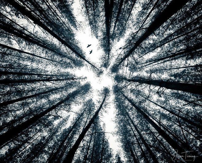 Rotoiti Forest