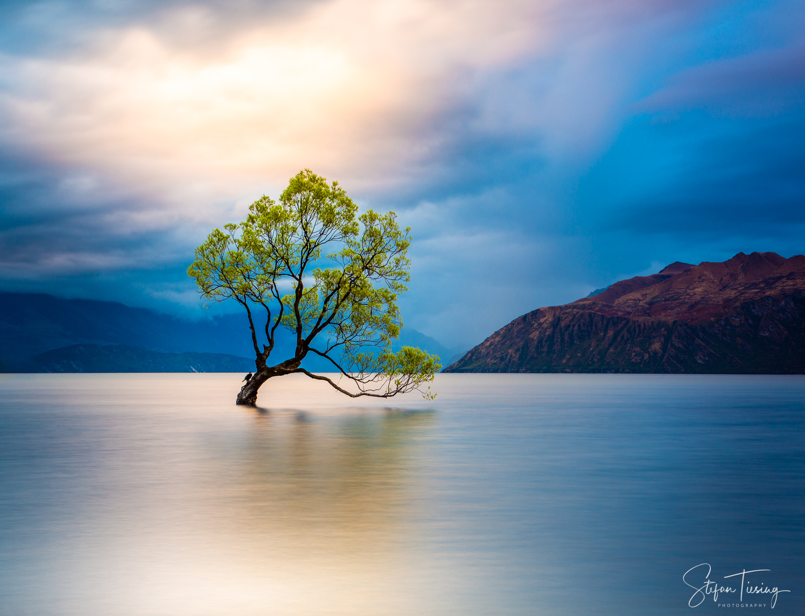 That Wanaka Tree II