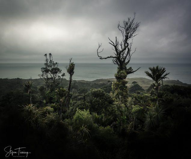 New Zealands Primeval Forest