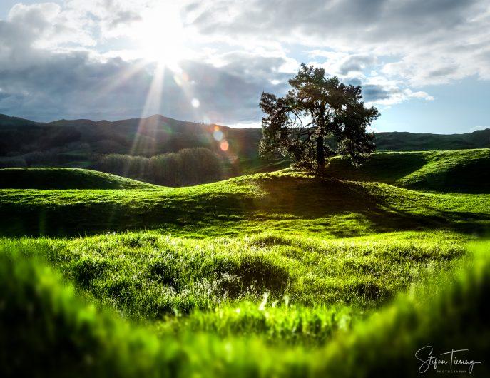 Sunset over New Zealand's Green Hills