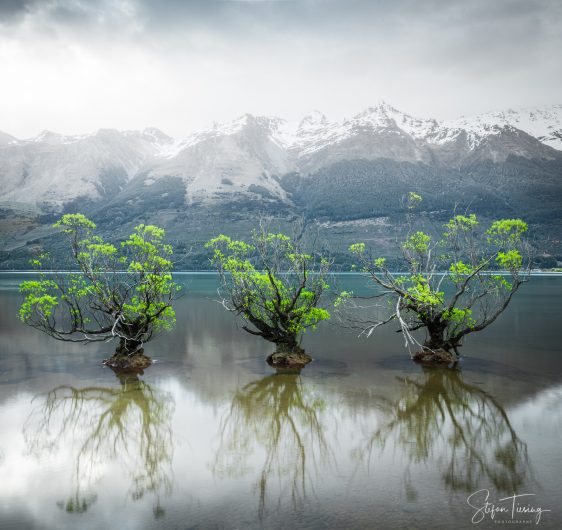 The Willow Trees of Glenorchy