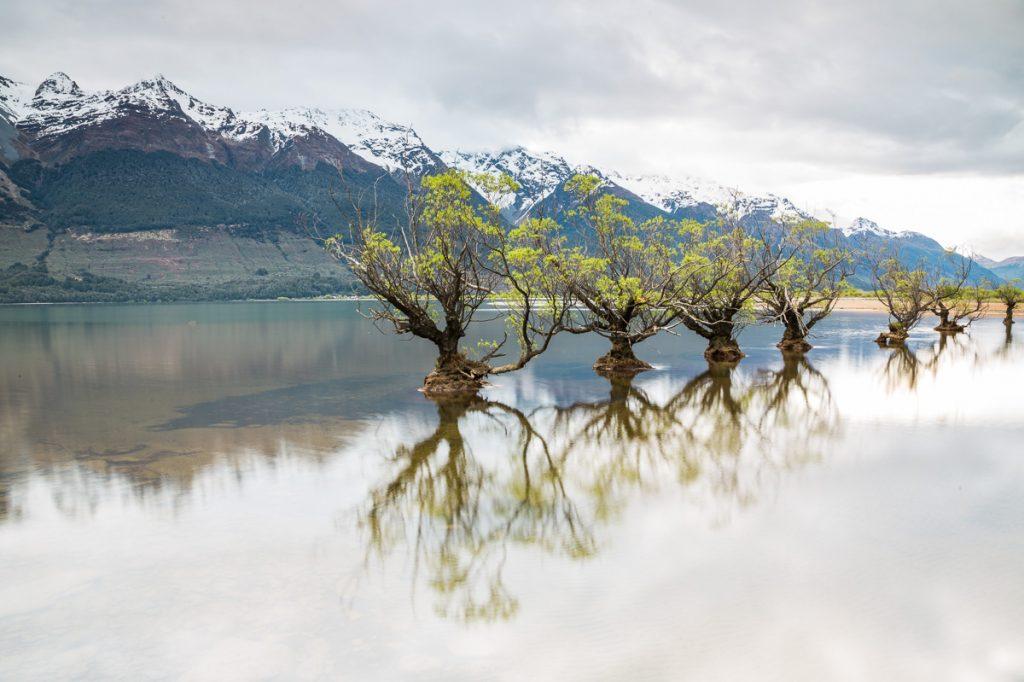 Sieben Weiden die im Wasser stehen - Willow Trees of Glenorchy