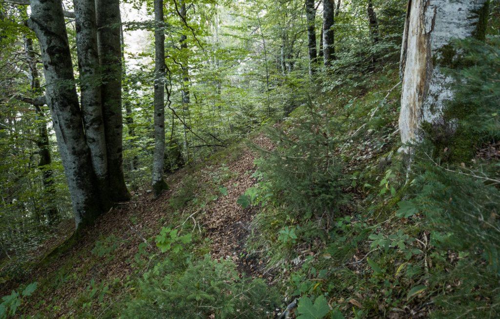 Pfad durch den Wald oberhalb der Faller-Klamm-Brücke