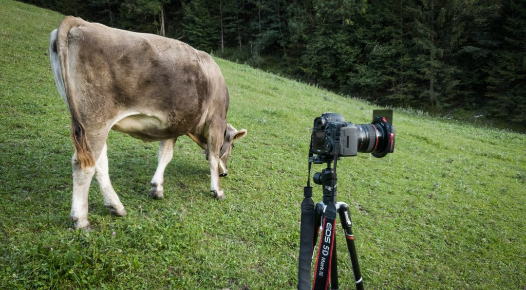 Kühe und eine Kamera an einer Neuschwanstein Fotolocation