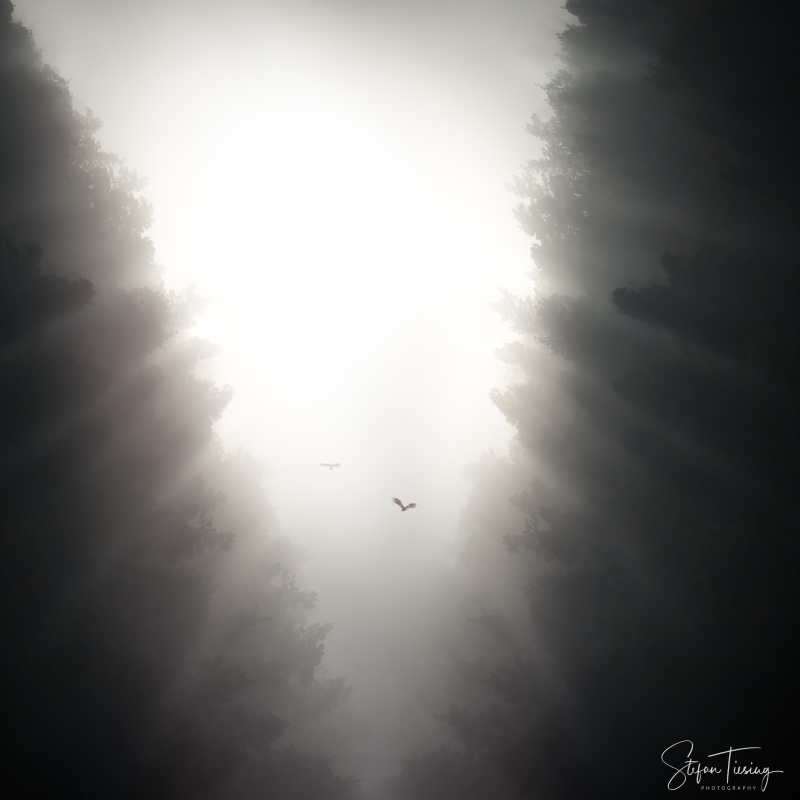 Misty Gorge Odenwald