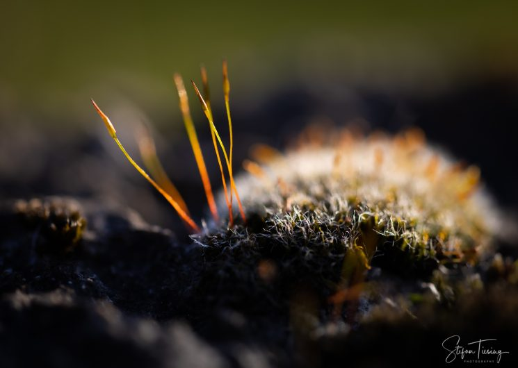 Moss Ball with Antenna