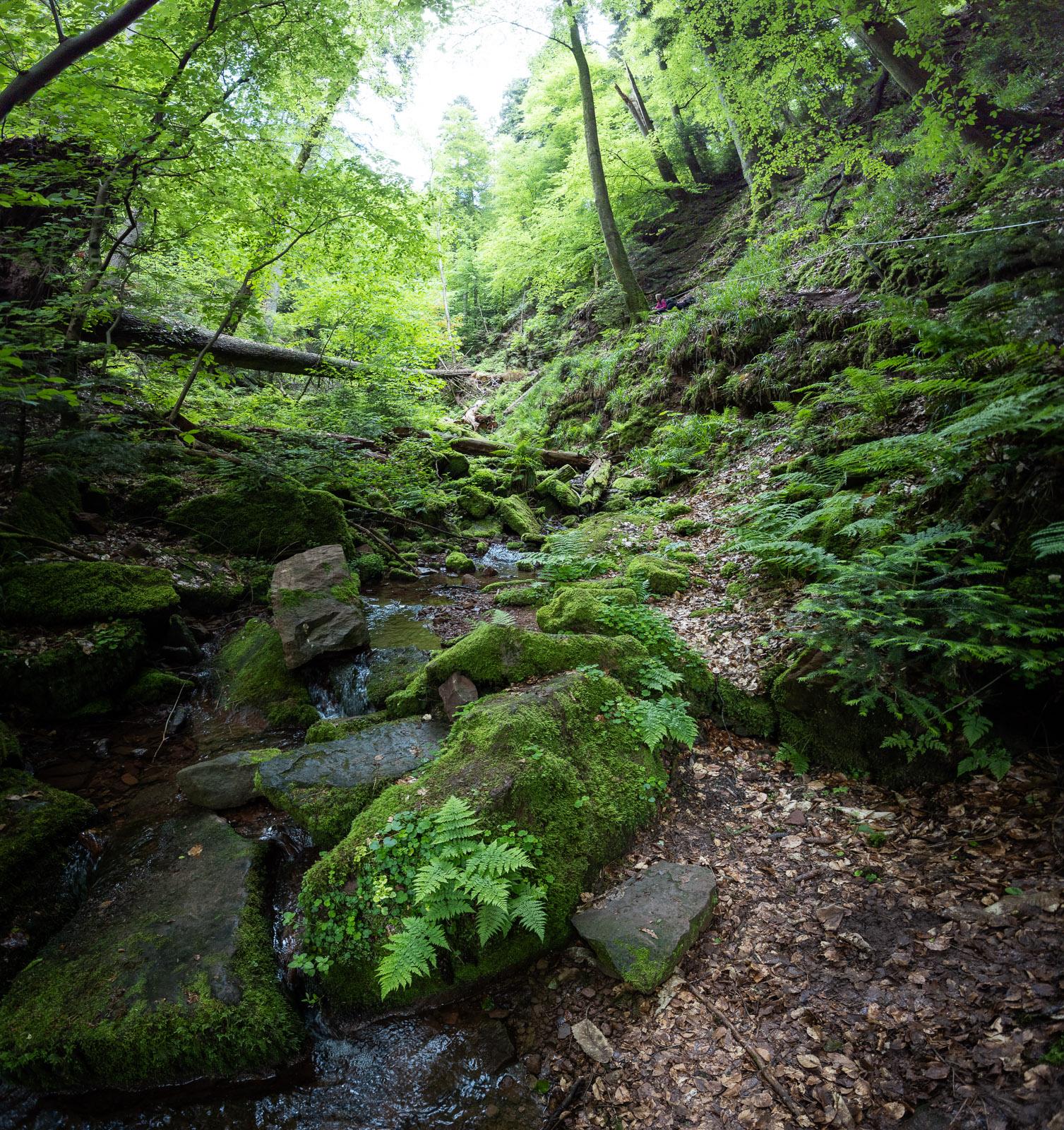Die Wolfsschlucht bei Klingenberg