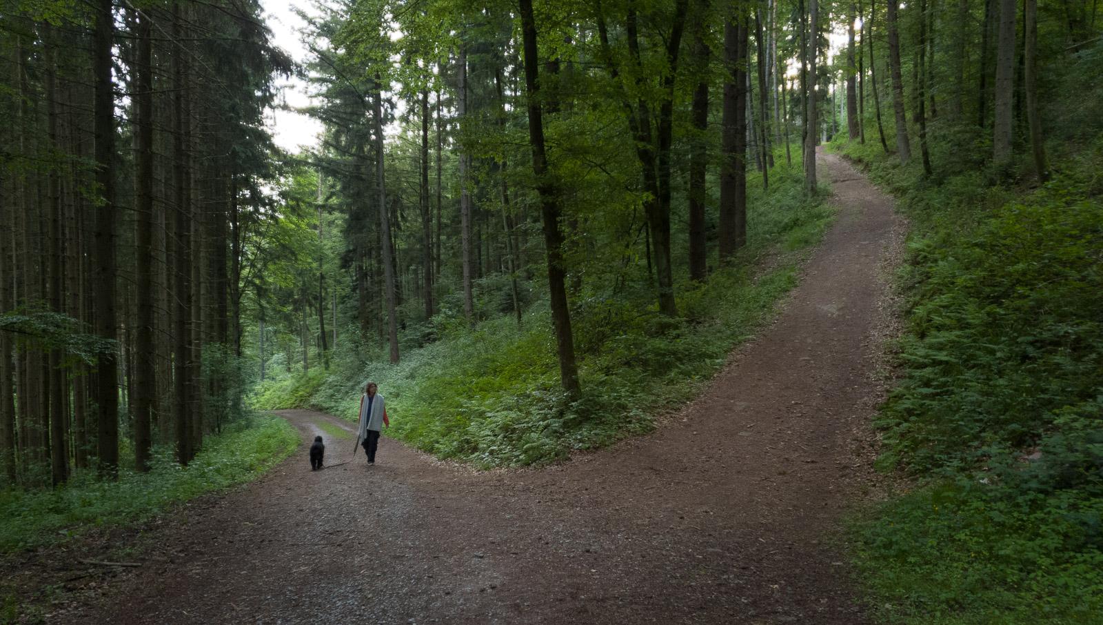 Weg zur Burg Wildenberg